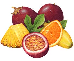Fruit portfolio