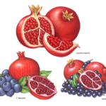 Whole and cut pomegranates, blueberries and acai berries