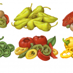 Various pepper illustrations for Castella Imports including pepperancini, Salonica, yellow banana, jalapeno, sweet peps, and marinated mushrooms.