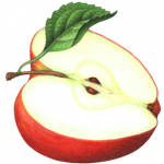 Cut half of red apple with leaf