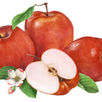 Fruit illustration of three Red Delicious apples with a cut half and apple blossoms.
