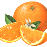 Orange illustration with two slices and an orange blossom with leaves in the middle.