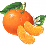 Whole tangerine with two tangerine segments and tangerine flower with leaves