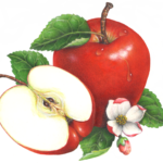 One whole red apple with a cut apple half, apple blossoms and leaves.