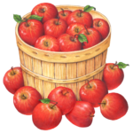 Bushel basket of red apples, also with apples on outside.