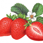 Two red strawberries with a cut half and leaves with a blossom