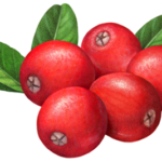 Five whole cranberries with three leaves.