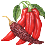 Three fresh red guajillo peppers with one dried guajillo pepper and two leaves