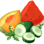 Cucumber melon with a cut cantaloupe slice, a cut watermelon wedge, a cut cumber and slices, with a melon flower and leaves.