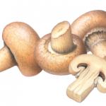 Three whole mushrooms and one mushroom slice