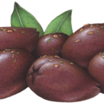 Seven pitted purple Kalamata olives with spices