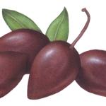 Four Kalamata jumbo olives