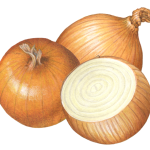 Two whole yellow onions and a cut onion half