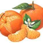 One whole and one peeled Mandarin orange or tangerine and one peeled Mandarin orange or tangerine with two segments and a flower with leaves.
