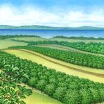 Grand Traverse County orchard scene