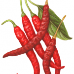 Fresh and dried Arbol red peppers