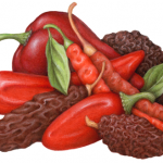 Assorted fresh and dried peppers including: Ancho, Arbol, Chipotle and Guajillo