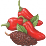 Fresh red jalapeno peppers with a dried chipotle pepper