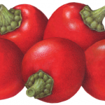 Five whole red sweetie pepps peppers with stems