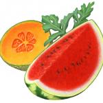 Melon illustration with a watermelon cut wedge, a cantaloupe cut half and a watermelon leaf