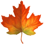 Single maple leaf from fall that is orange and red.
