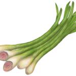 Five stalks of lemongrass