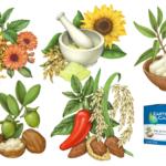 Illustrations of witch hazel, mint, sulfur, sunflower, oats, she butter, jojoba, rice, almonds, and jalapeno pepper.