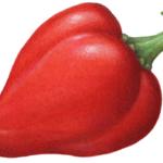Red pimento pepper.