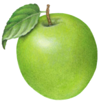 One green apple with a leaf.